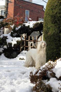 SnowGarden2011Fev1