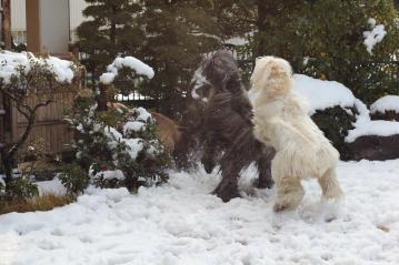 SnowGarden2011Fev4