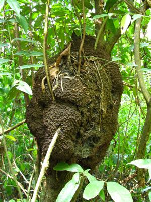 蟻の巣blog01