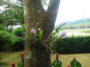 南国のお花