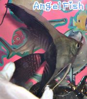 AngelFish ~エンジェルフィッシュ~