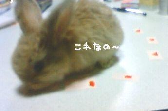 kinaco2.jpg