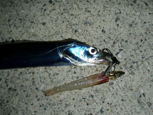 2008.8.2神戸太刀魚