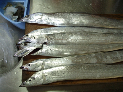 2008.8.2神戸太刀魚2