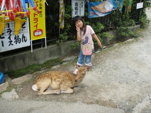2008.8.13奈良公園1