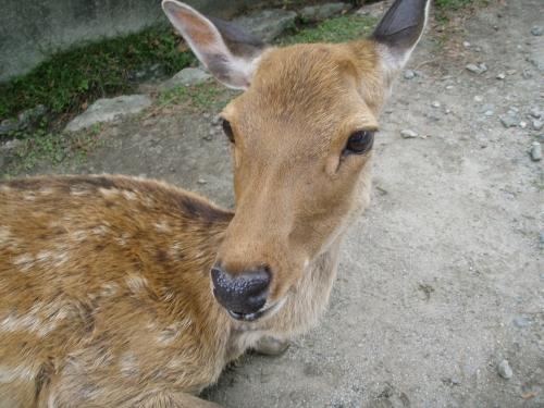 2008.8.13奈良公園