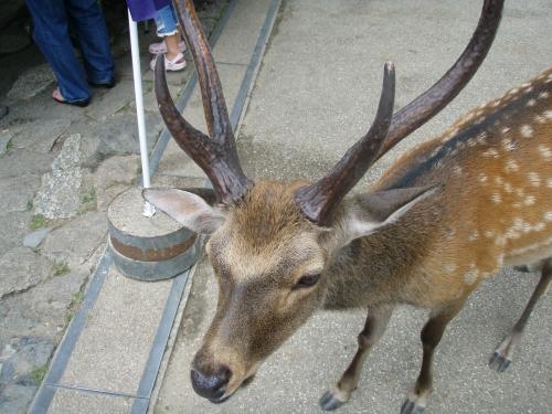2008.8.13奈良公園2