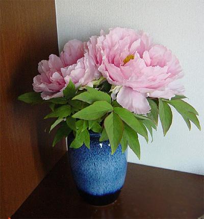 20060420お花