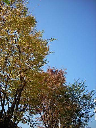 20081113紅葉と空