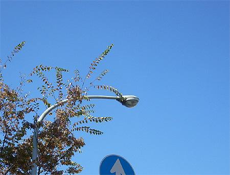 20081113紅葉と空と街灯①