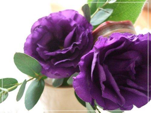 幸運の紫♪