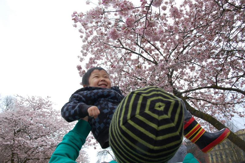 2012-04-04 Sakura (3)