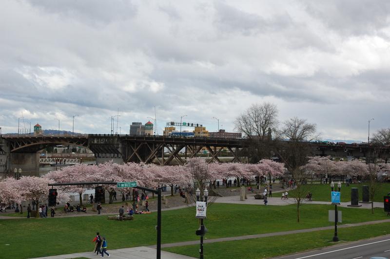 2012-04-04 Sakura (2)