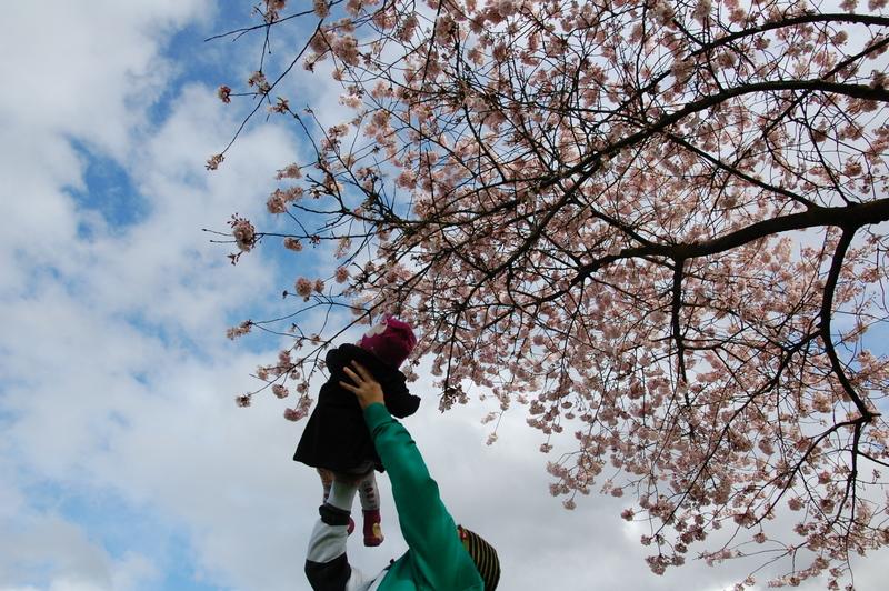 2012-04-04 Sakura (4)