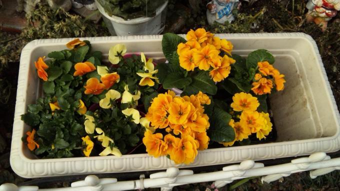 Flowers_20110130