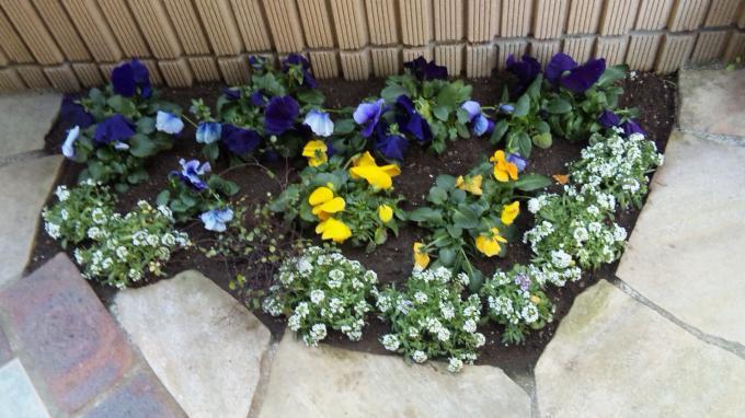 Flowers_20110131