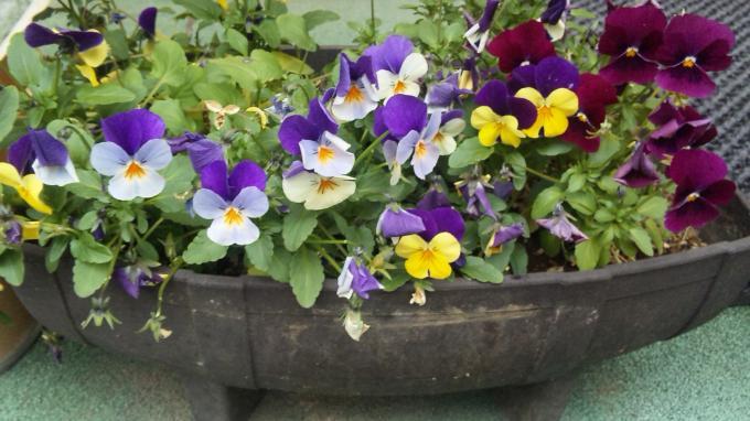 Flowers_20110203