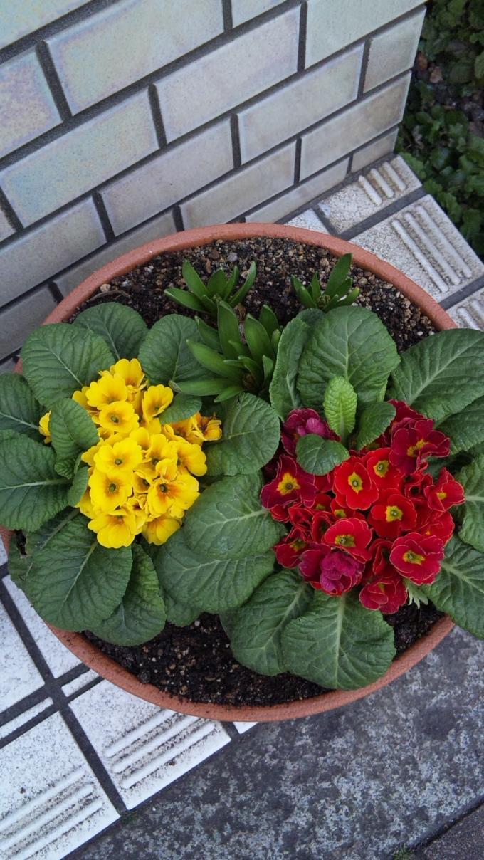Flowers_20110205