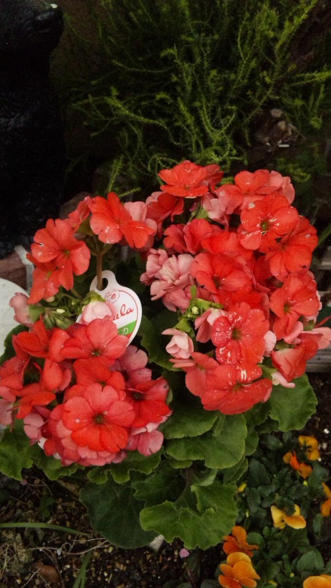 Flowers_20110206
