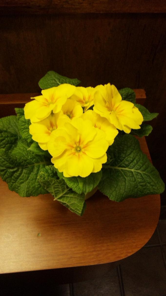 Flowers_20110207