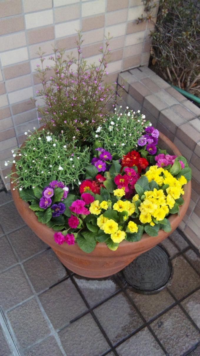 Flowers_20110208