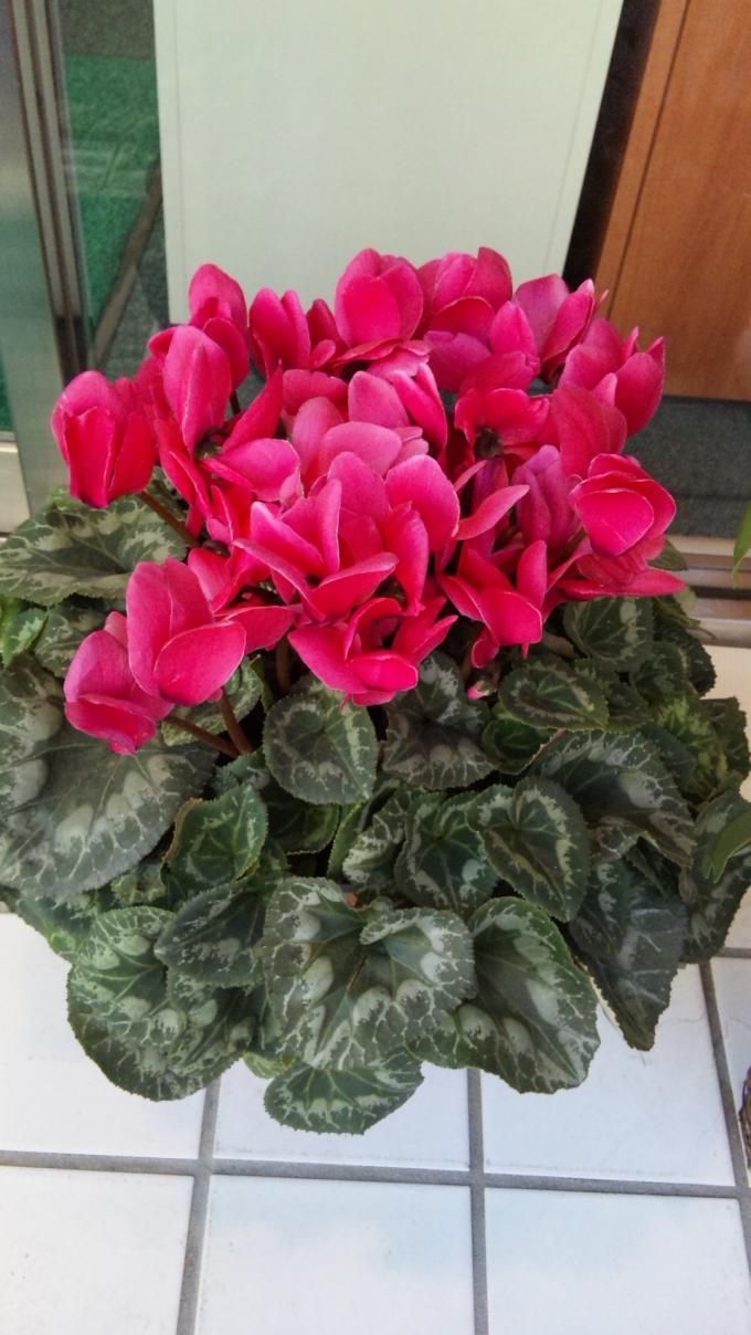Flower_20110208