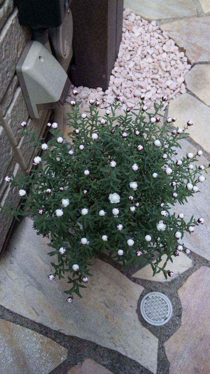 Flower_20110214