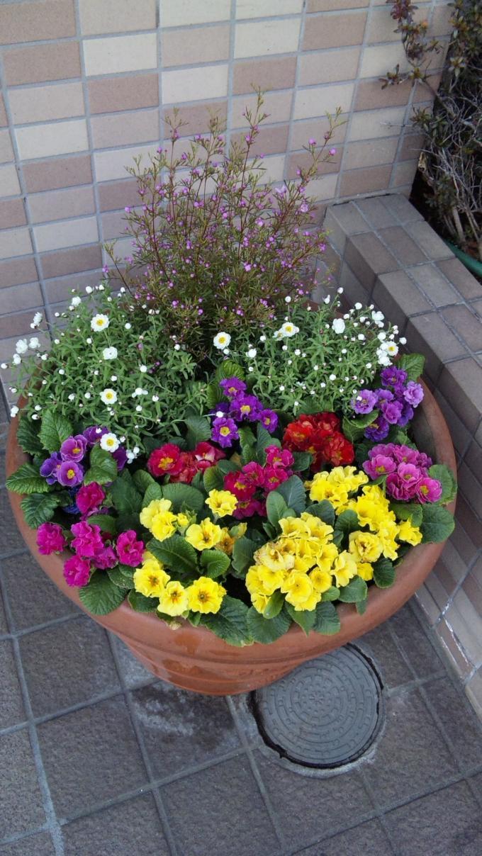 Flowers_20110215
