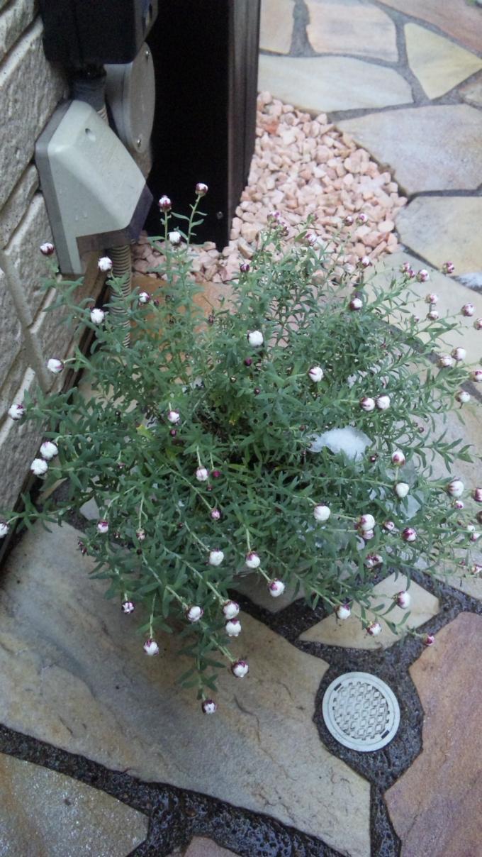Flower_20110215