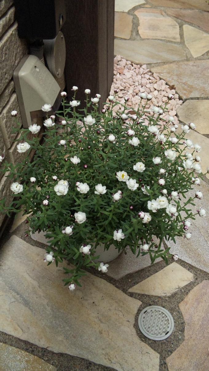 Flower_20110221