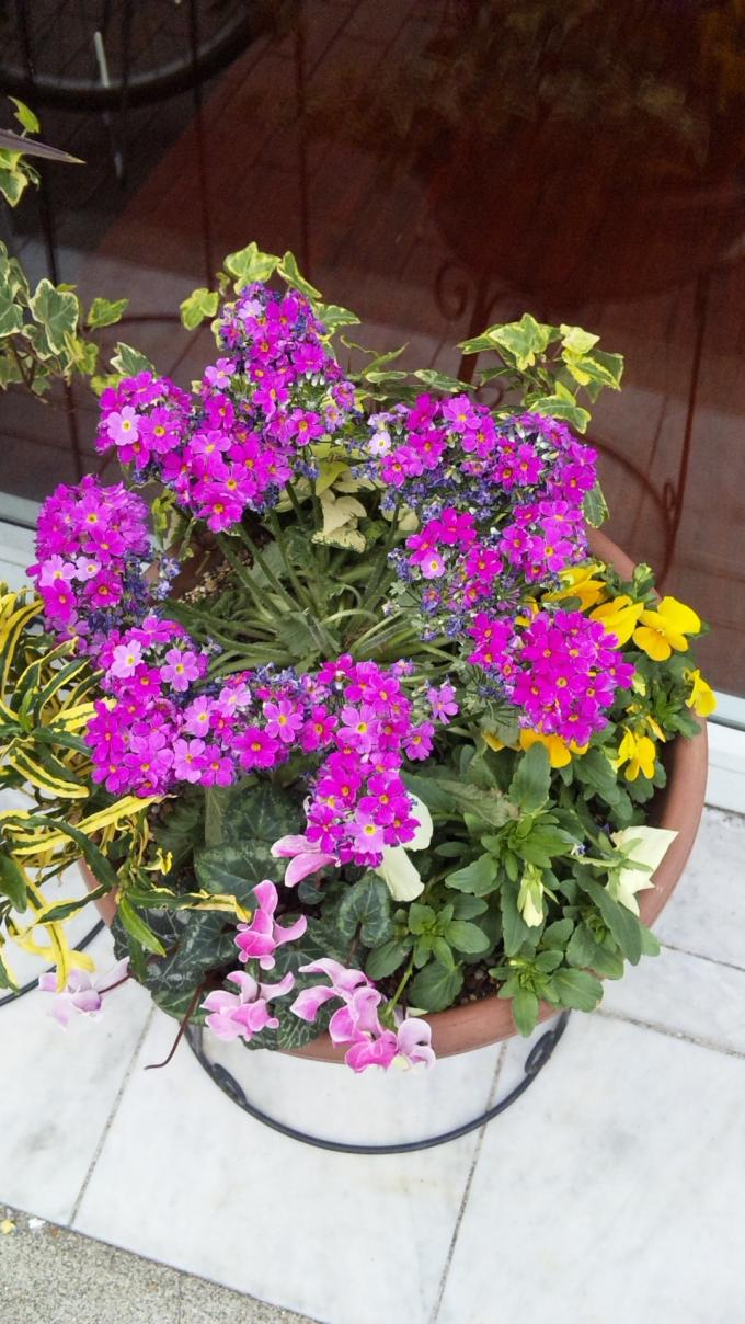Flowers_20110221