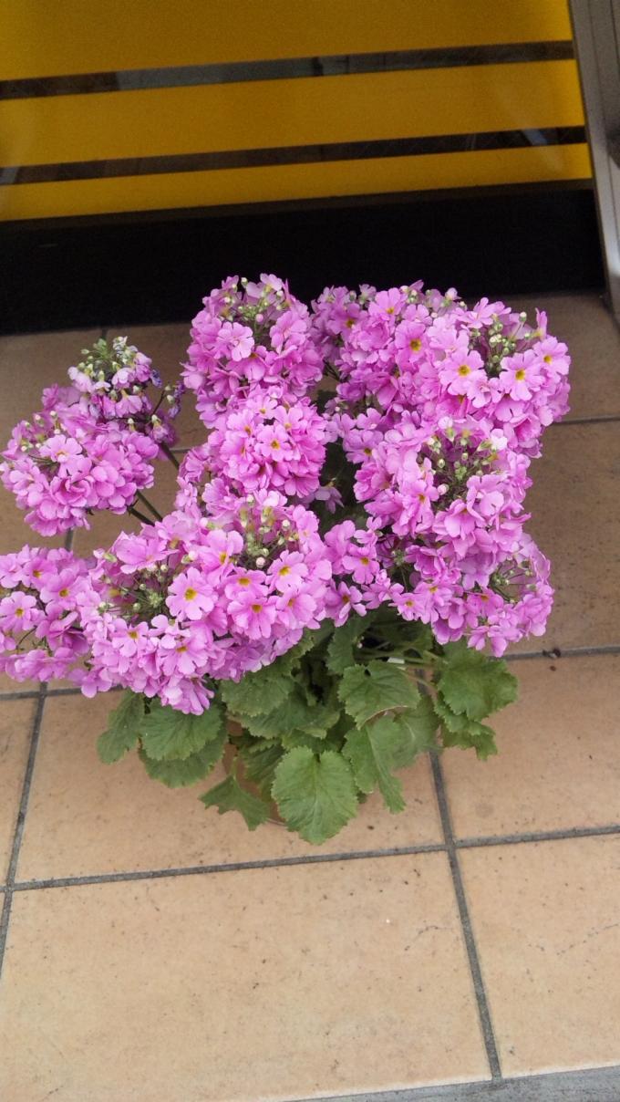 Flower_20110223