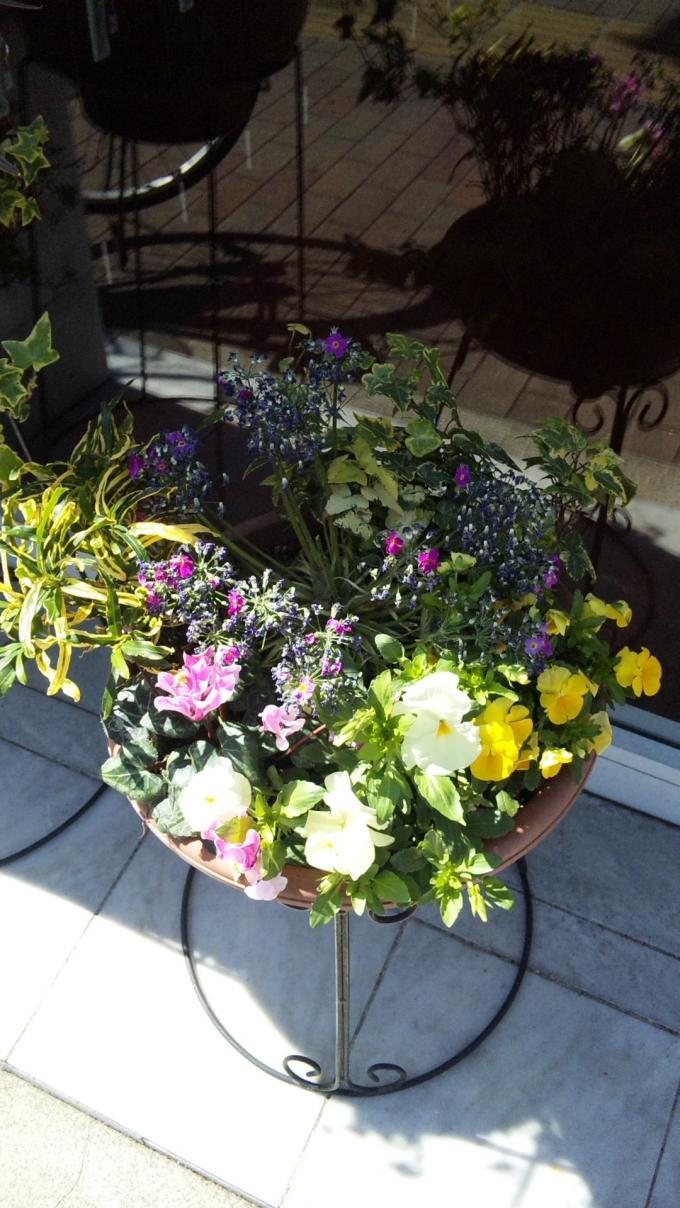 Flowers_20110303