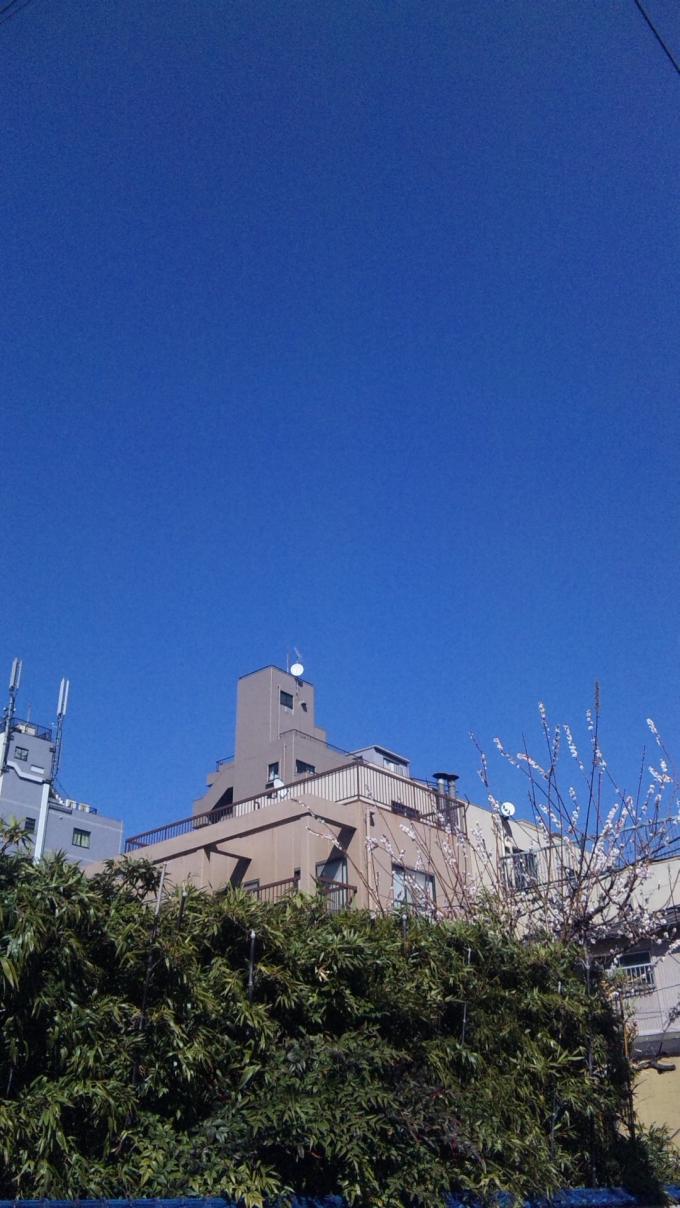 BLUE SKY&UME_20110318