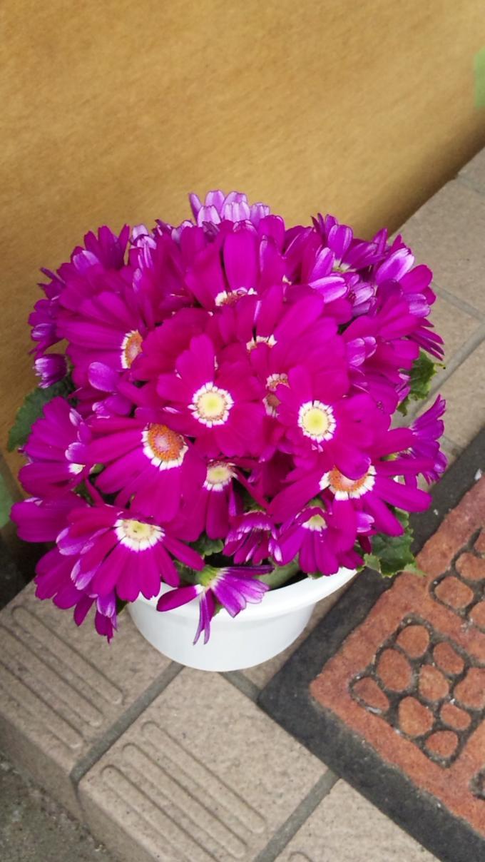 Flowers_20110320