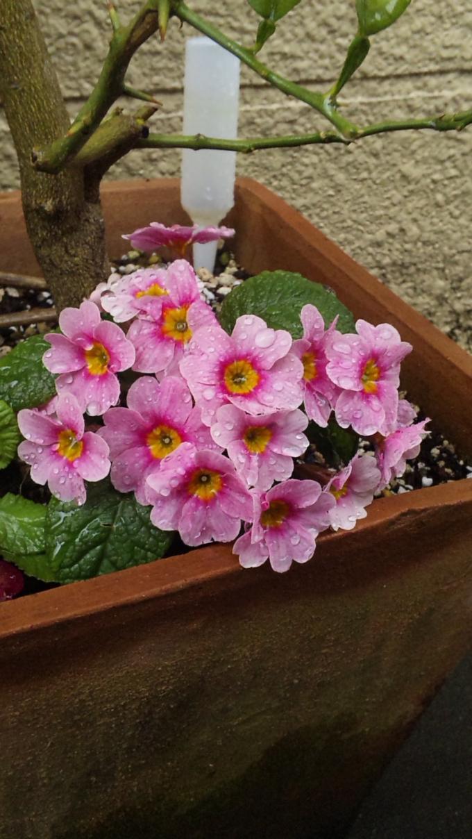 Flower_20110321