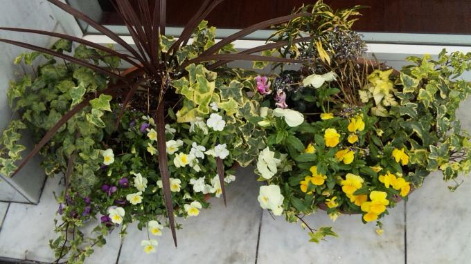 Flowers_20110322