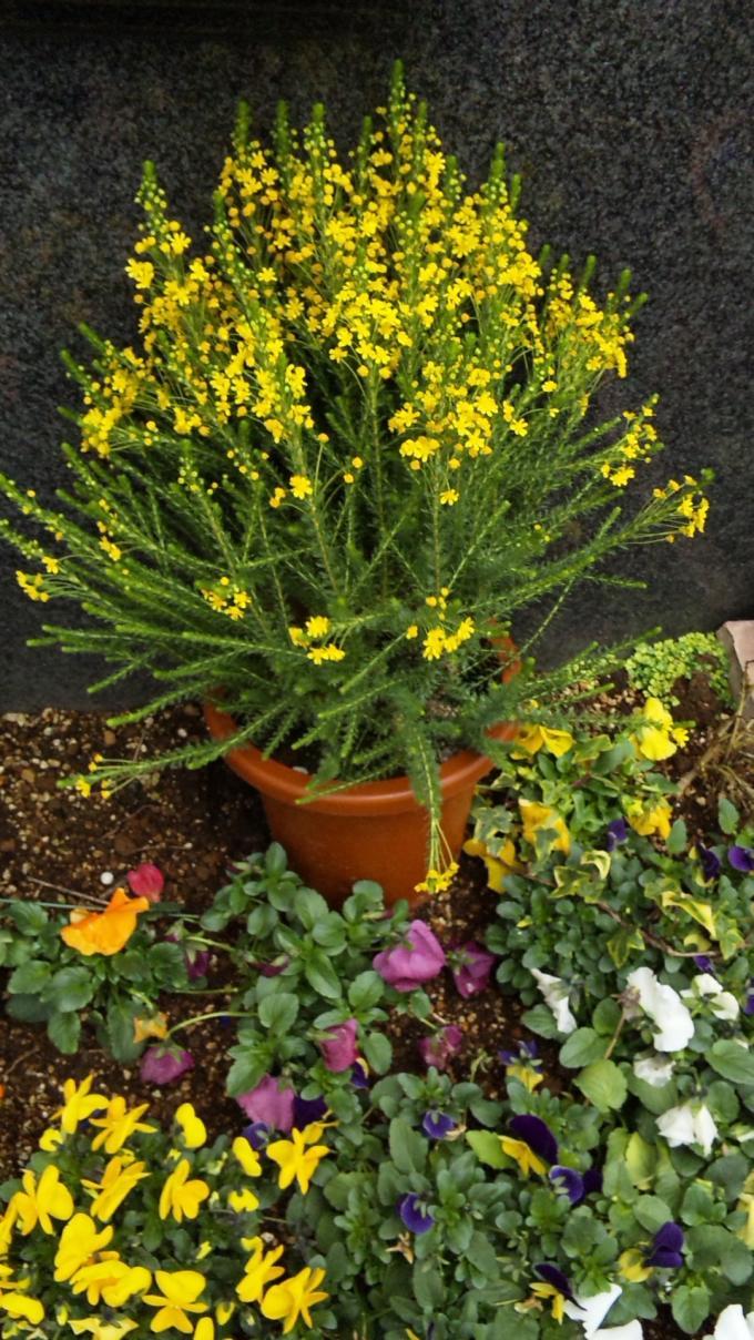Flowers_20110323