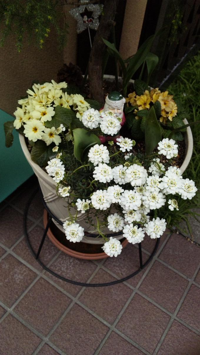 Flowers_20110325