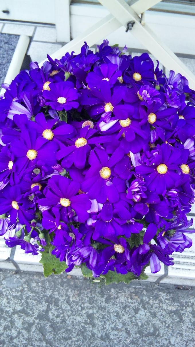 Flowers_20110326