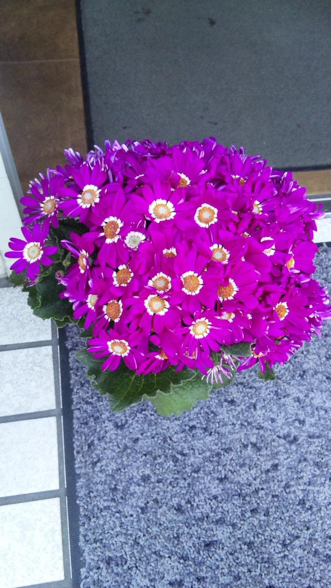 Flowers_20110327
