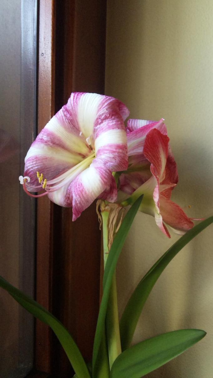 Flowers_20110329