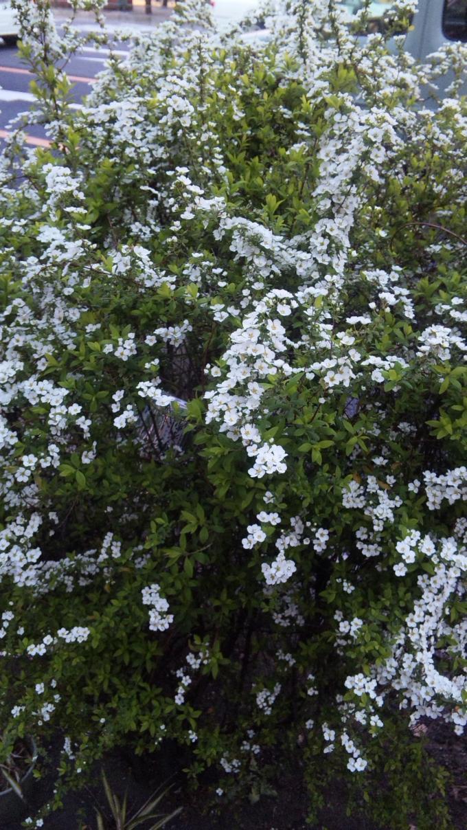Flowers_20110330