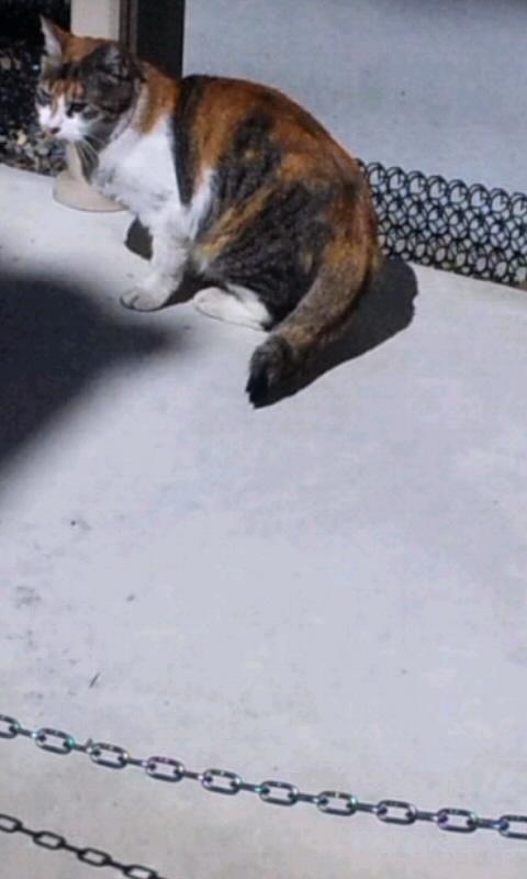 CAT_20110304