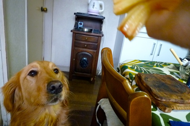 犬とクレープ3