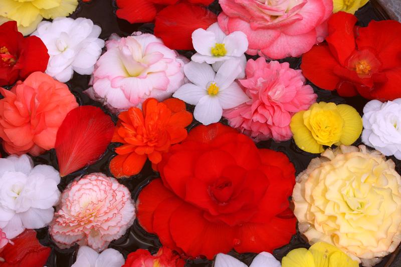 お花のプール