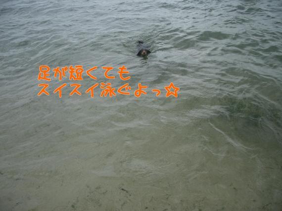 泳いでます~