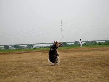 常連犬がトコトコやって来てグランドを占拠。