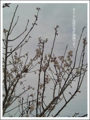 CIMG3350.jpg