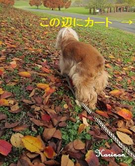 ブログ 12.12 ② IMG_5029